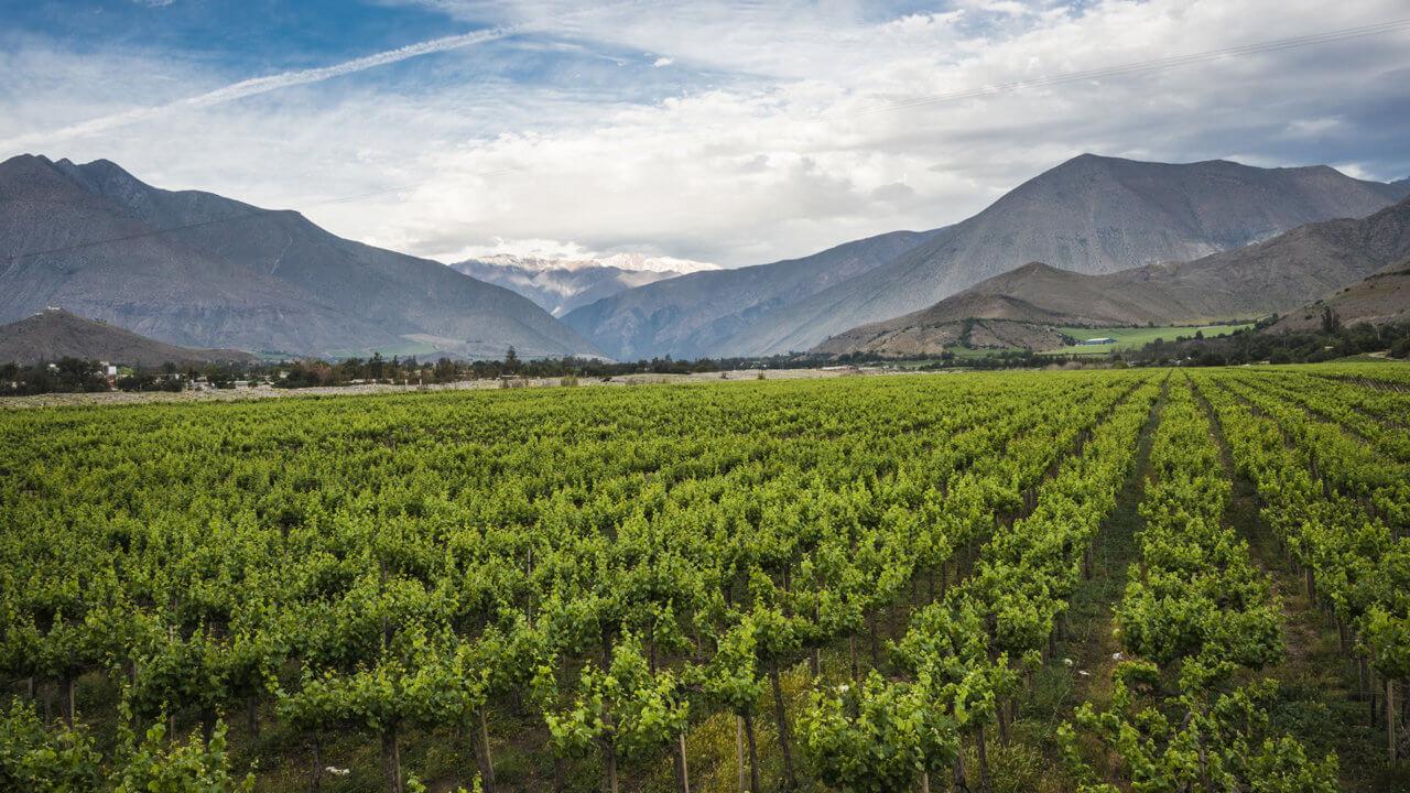 Weinland Chile