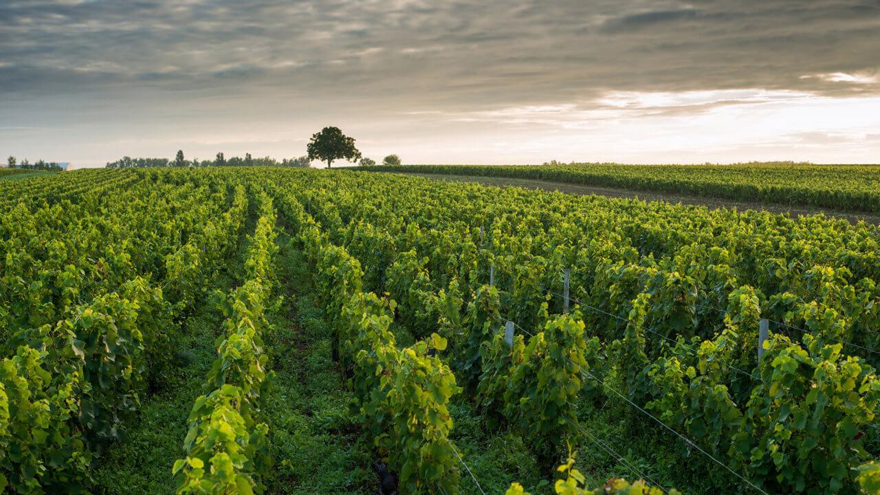 Weinland Kalifornien
